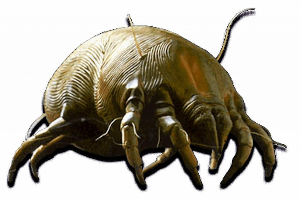 dust mite sanitization germ busters
